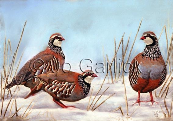 Winter Partridge