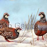 Winter Partridge