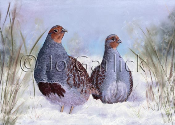 English Partridge in the Snow