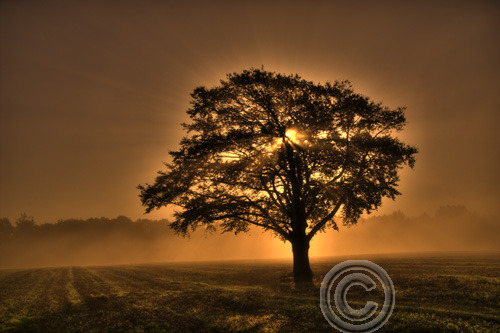Autumn tree in misty sunrise, Kent