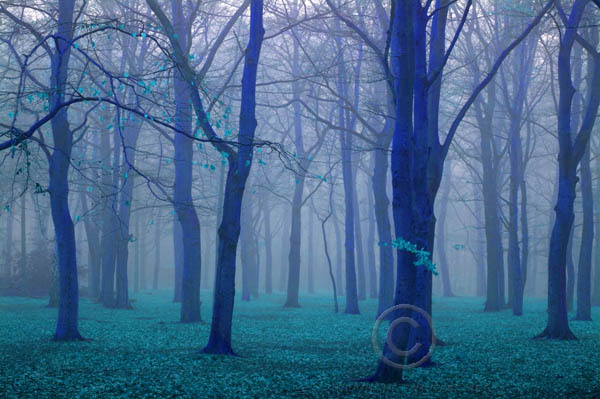 foggy trees22