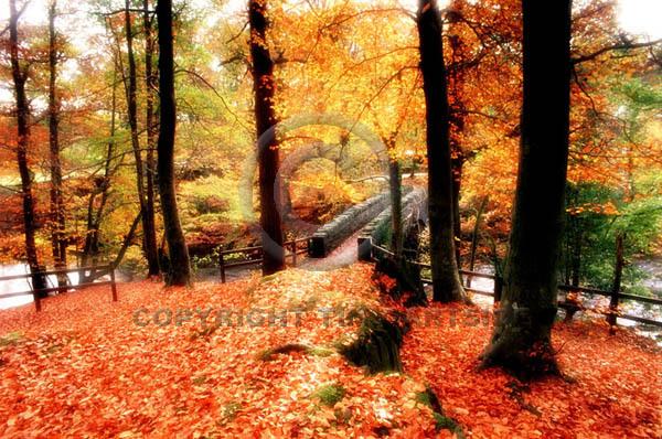 autumn trees lake district