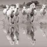 Reflections of the Camargue