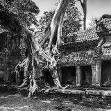 Roots, Ruins & Relics
