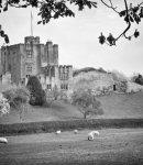 Bothal Castle