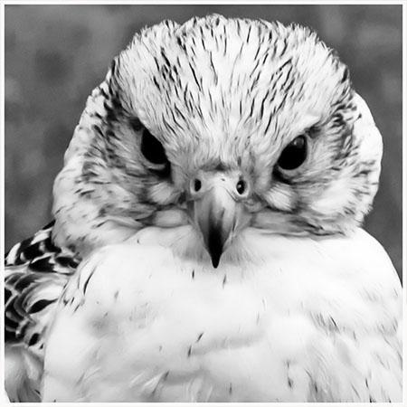 Falcon 3
