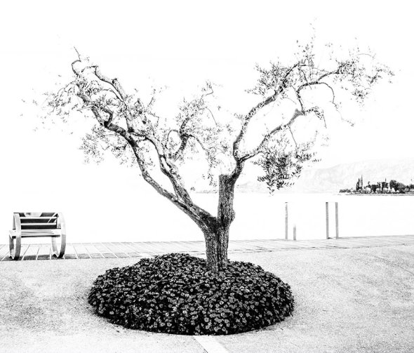 Tree captured in mono