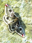 Moth on a wall
