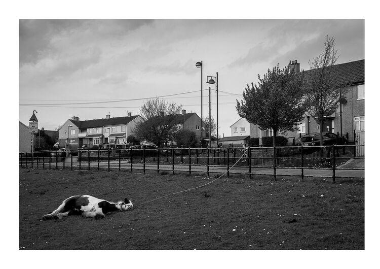 Sleeping Horse A4 print