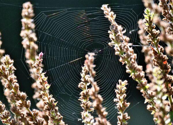 BACK LIT SPIDER WEB