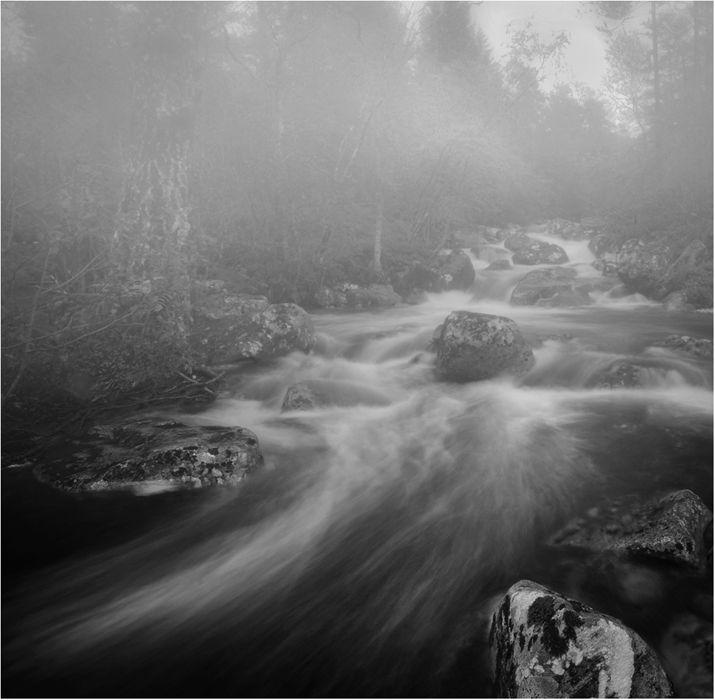 Foggy Stream
