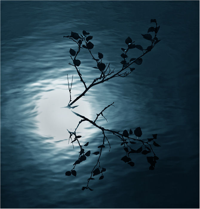 Moonlit Autumn