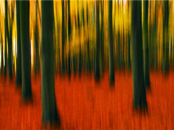 Autumn Beech