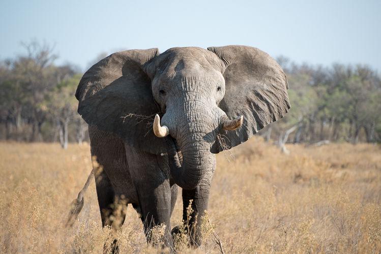 Botswana -5