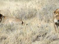 Namibia -4