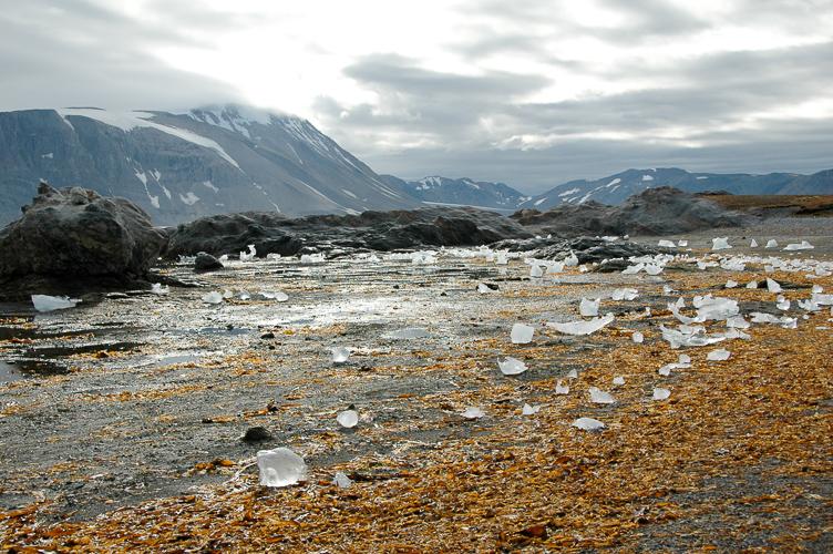 Spitsbergen -24