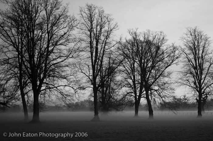 Blenhiem Evening Mist