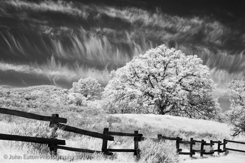 Fence and oak