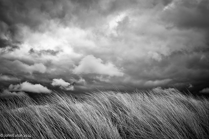 Grass in Storm