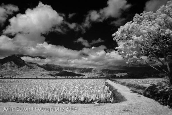 Kauai, Taro Fields