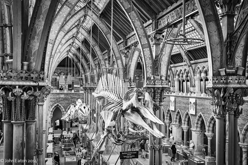 Natural History Museum 2