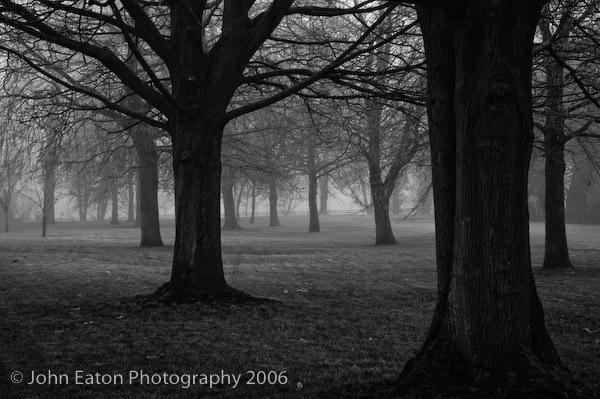 Oxford, Trees in Fog