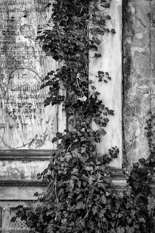 Jewish Cemetery #8