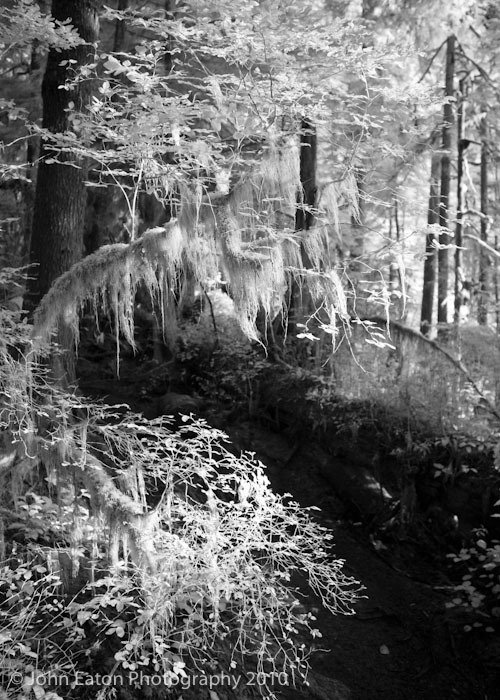 Rain Forest #6