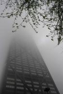 John in Fog II