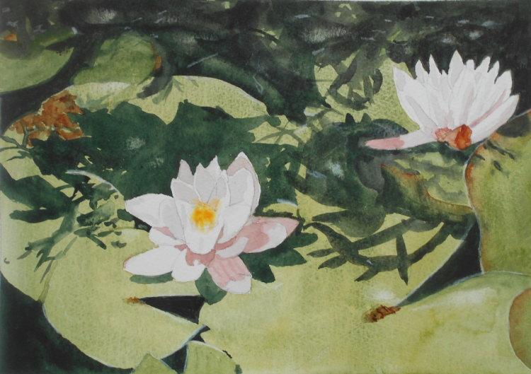 David's Lily pond
