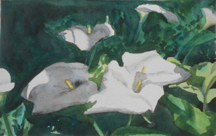 Lilies in shade