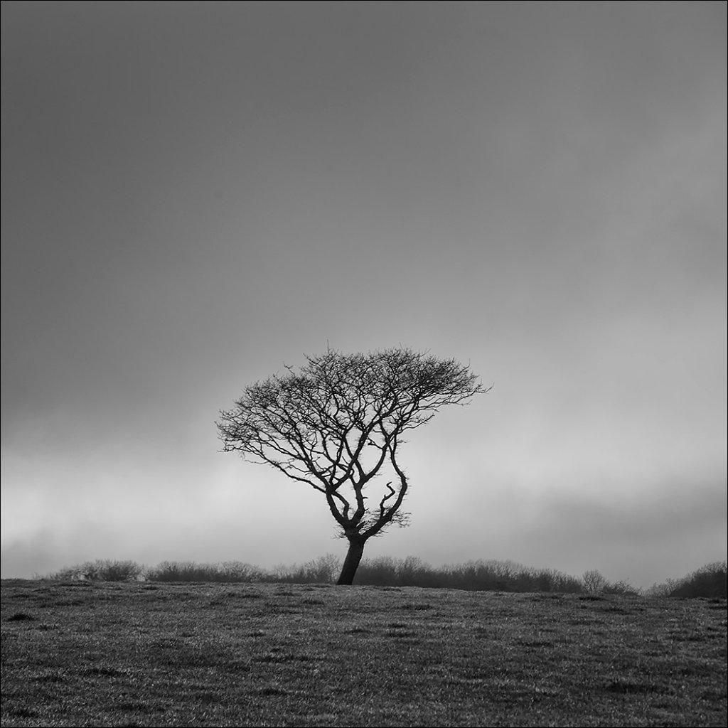 Tree, Gortroe, East Cork