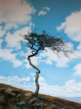 'A Twist in Time' - Hawthorn Tree at Hadrian's Wall - Original Oil Painting - SOLD