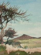 "Pines above Roseberry  - Original Watercolour - 12"" x 12"" - SOLD"