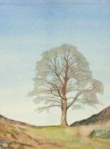 "Spring Awakening, Sycamore Gap - Original Watercolour - 13"" x 12"" - SOLD"