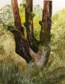 Birch Tree Stumps