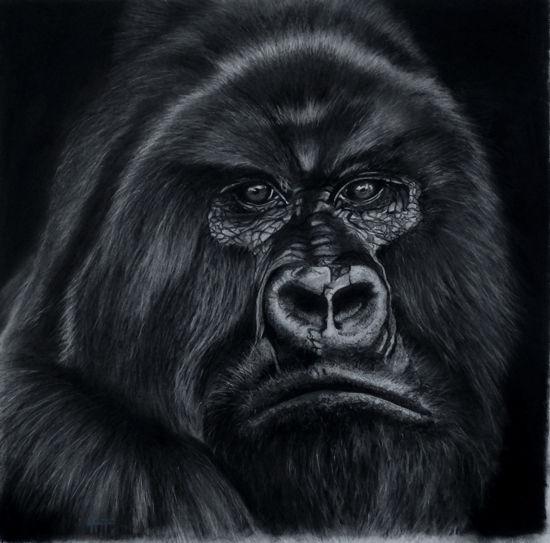 Kong (sold)
