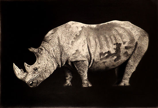Rhino(sold)