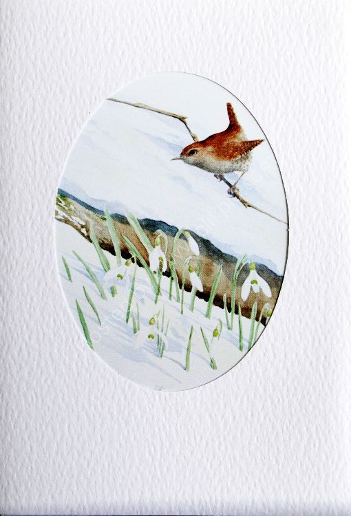 Card Wren and Snowdrops