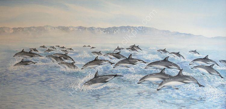 Dusky dolphins - Kaikoura, New Zealand