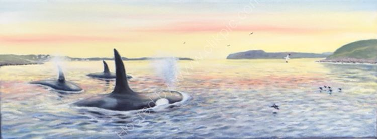 Orcas Blue Mull Sound