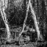 Cypress Swamp, Florida Everglades
