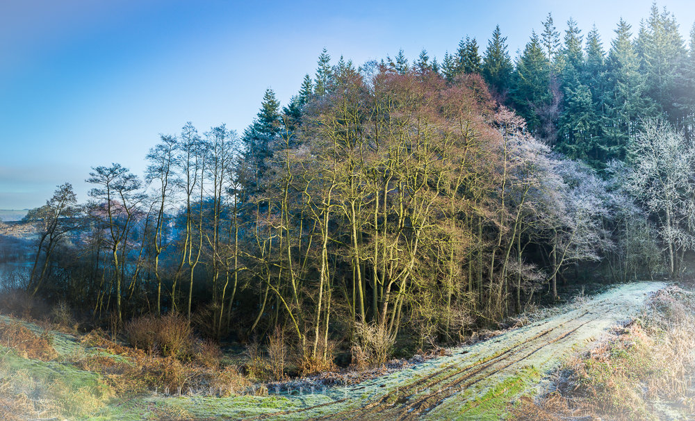 Woodland Frost