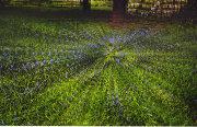 bluebells osterley park