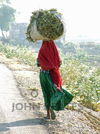 Indian woman with fodder