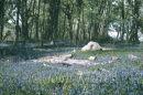 Park Woods, Gower
