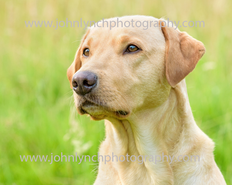 Location Pet Photography Ashford Kent
