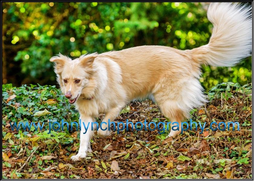 Dog Photographer Ashford Kent