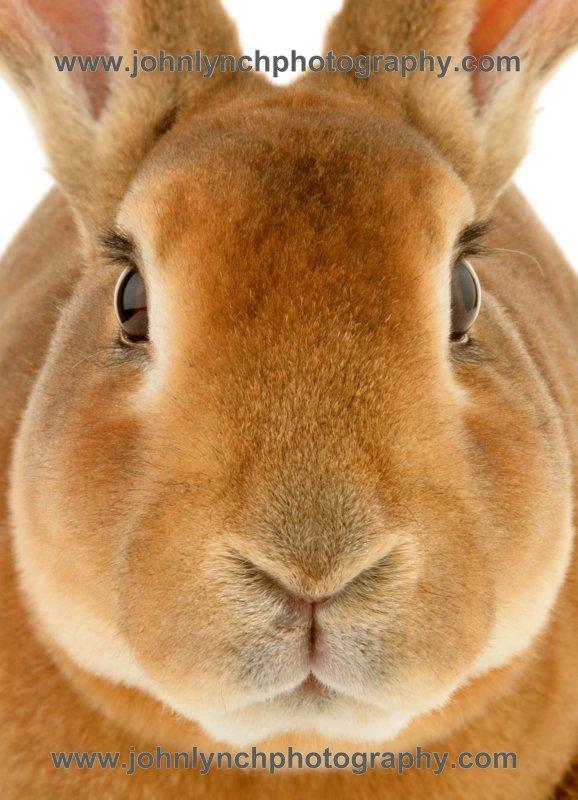 Kent Rabbit & Pet Photography