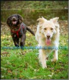 Pet Dog Photography Ashford Kent